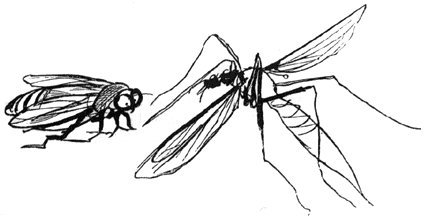 Edward_Lear_The_Daddy_Long-Legs_and_the_Fly.jpg